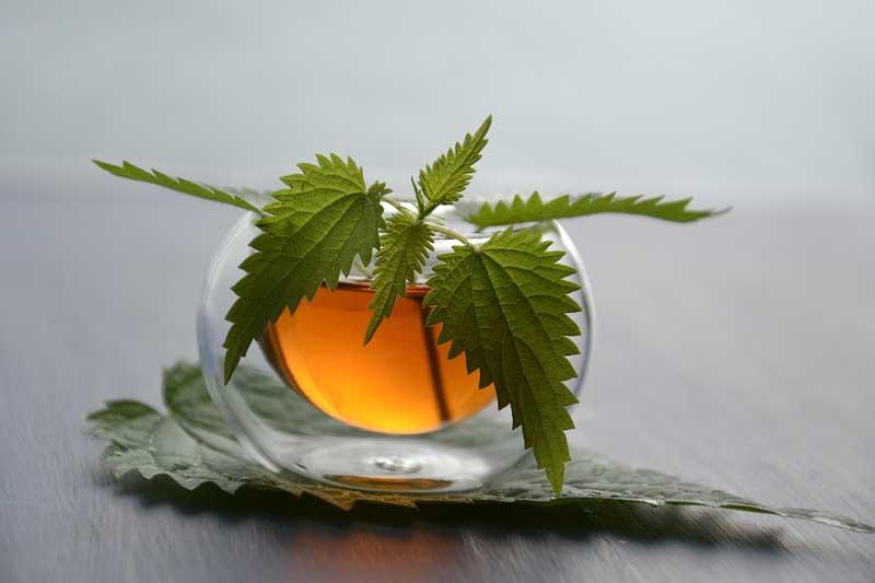 čaj od koprive za kožu