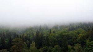 Hoće li Pančićeva omorika preživeti klimatske promene? 3