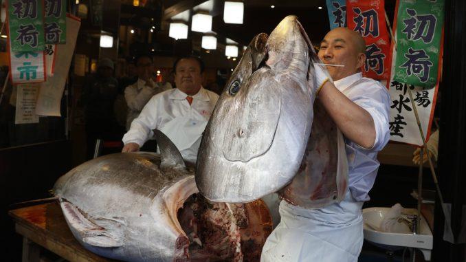 Džinovska tuna na pijaci u Japanu prodata za 1,5 miliona evra 1