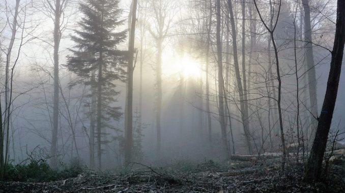 Svetlosna terapija protiv zimske depresije 1
