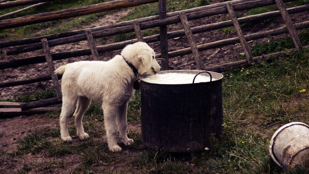 Zašto treba obratiti pažnju na jak apetit psa 2