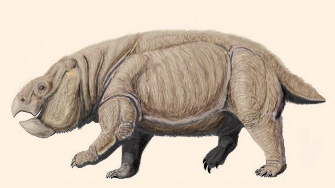 Drevni rođak sisara 1
