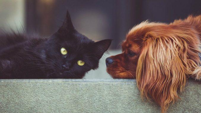 Psi i mačke mogu da se zaraze korona virusom, ali ga ne prenose 1