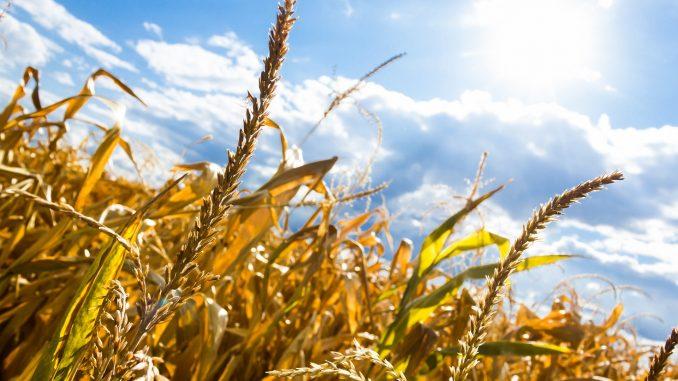 Koliko će da poraste temperatura u Srbiji zbog klimatskih promena? 1