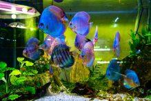 U Javnom akvarijumu: Mesto gde su životinje uvek na prvom mestu (FOTO) 31