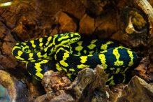 U Javnom akvarijumu: Mesto gde su životinje uvek na prvom mestu (FOTO) 32