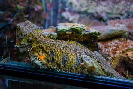 U Javnom akvarijumu: Mesto gde su životinje uvek na prvom mestu (FOTO) 33