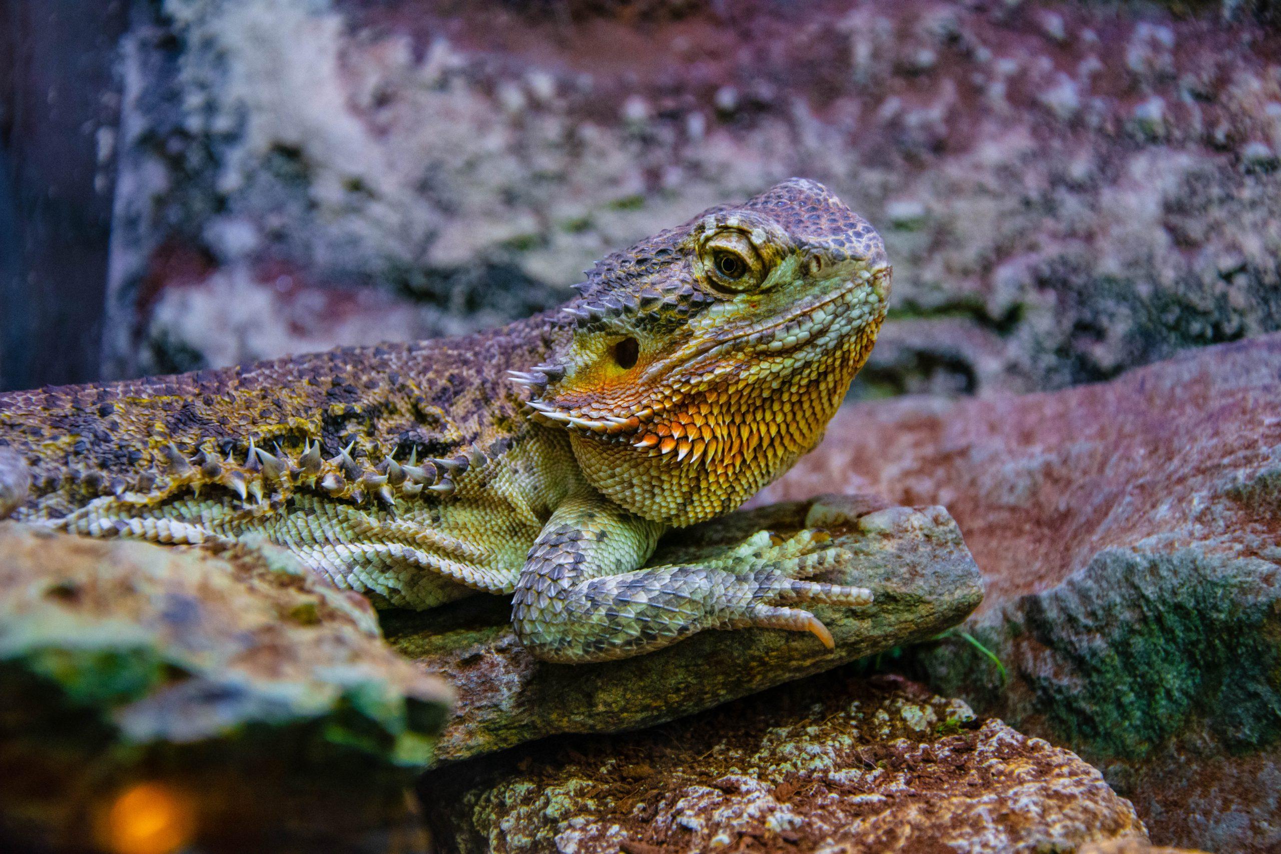 U Javnom akvarijumu: Mesto gde su životinje uvek na prvom mestu (FOTO) 12