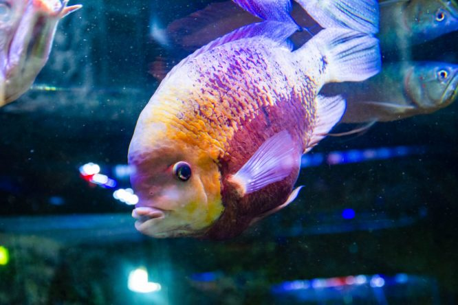 U Javnom akvarijumu: Mesto gde su životinje uvek na prvom mestu (FOTO) 34