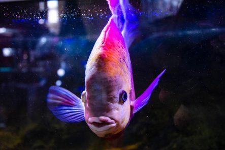 U Javnom akvarijumu: Mesto gde su životinje uvek na prvom mestu (FOTO) 13