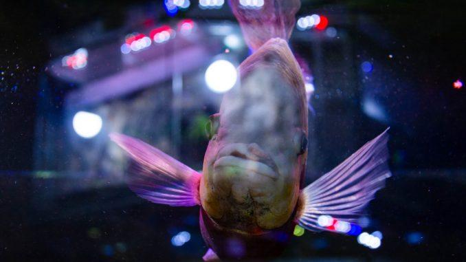 U Javnom akvarijumu: Mesto gde su životinje uvek na prvom mestu (FOTO) 1