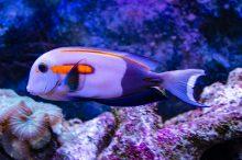 U Javnom akvarijumu: Mesto gde su životinje uvek na prvom mestu (FOTO) 16