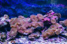 U Javnom akvarijumu: Mesto gde su životinje uvek na prvom mestu (FOTO) 17
