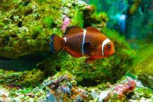 U Javnom akvarijumu: Mesto gde su životinje uvek na prvom mestu (FOTO) 18