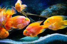 U Javnom akvarijumu: Mesto gde su životinje uvek na prvom mestu (FOTO) 19