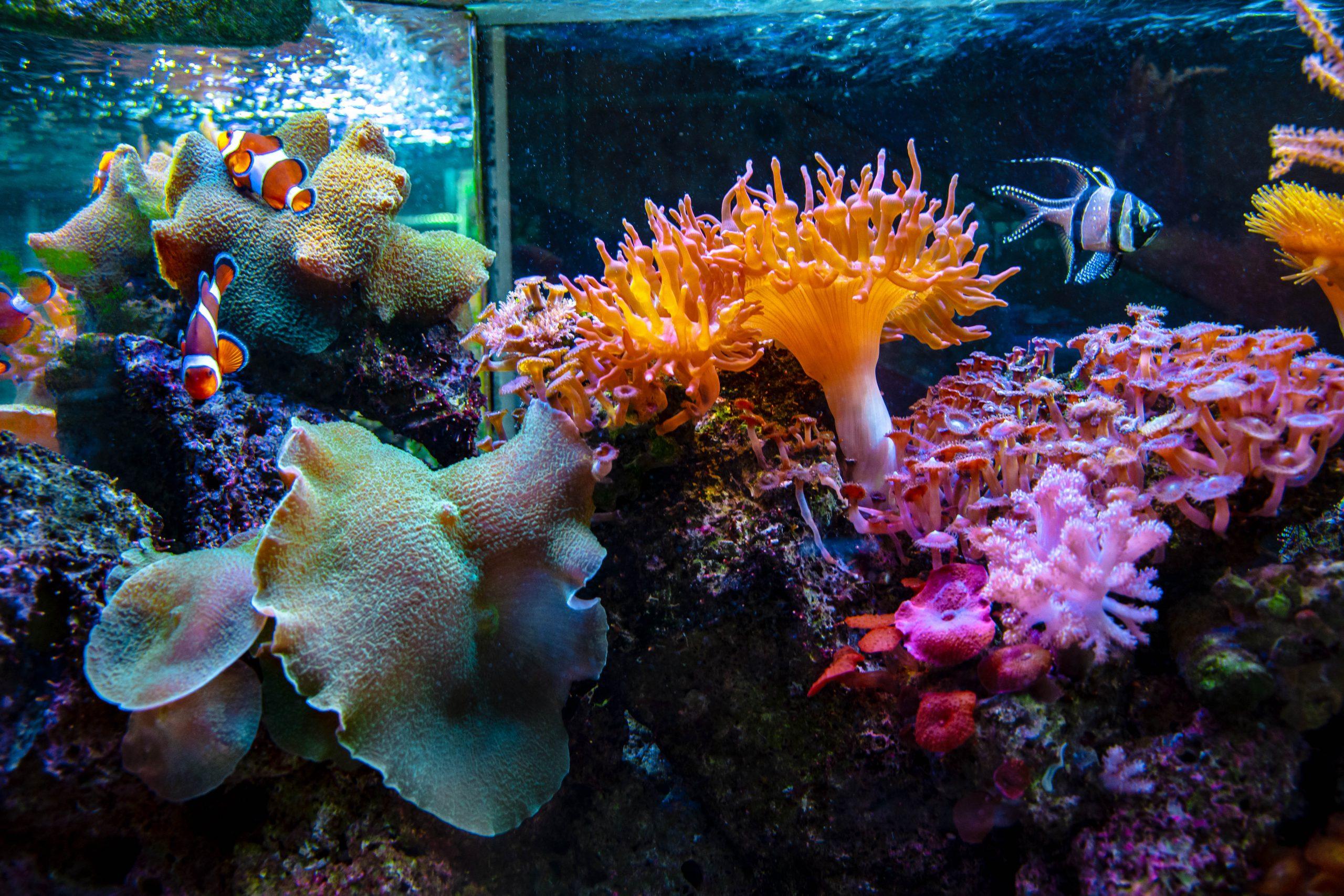 U Javnom akvarijumu: Mesto gde su životinje uvek na prvom mestu (FOTO) 2