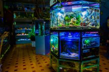 U Javnom akvarijumu: Mesto gde su životinje uvek na prvom mestu (FOTO) 20