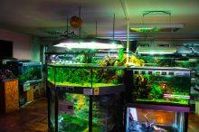 U Javnom akvarijumu: Mesto gde su životinje uvek na prvom mestu (FOTO) 22