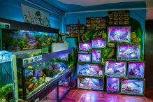 U Javnom akvarijumu: Mesto gde su životinje uvek na prvom mestu (FOTO) 23