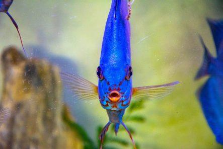U Javnom akvarijumu: Mesto gde su životinje uvek na prvom mestu (FOTO) 21
