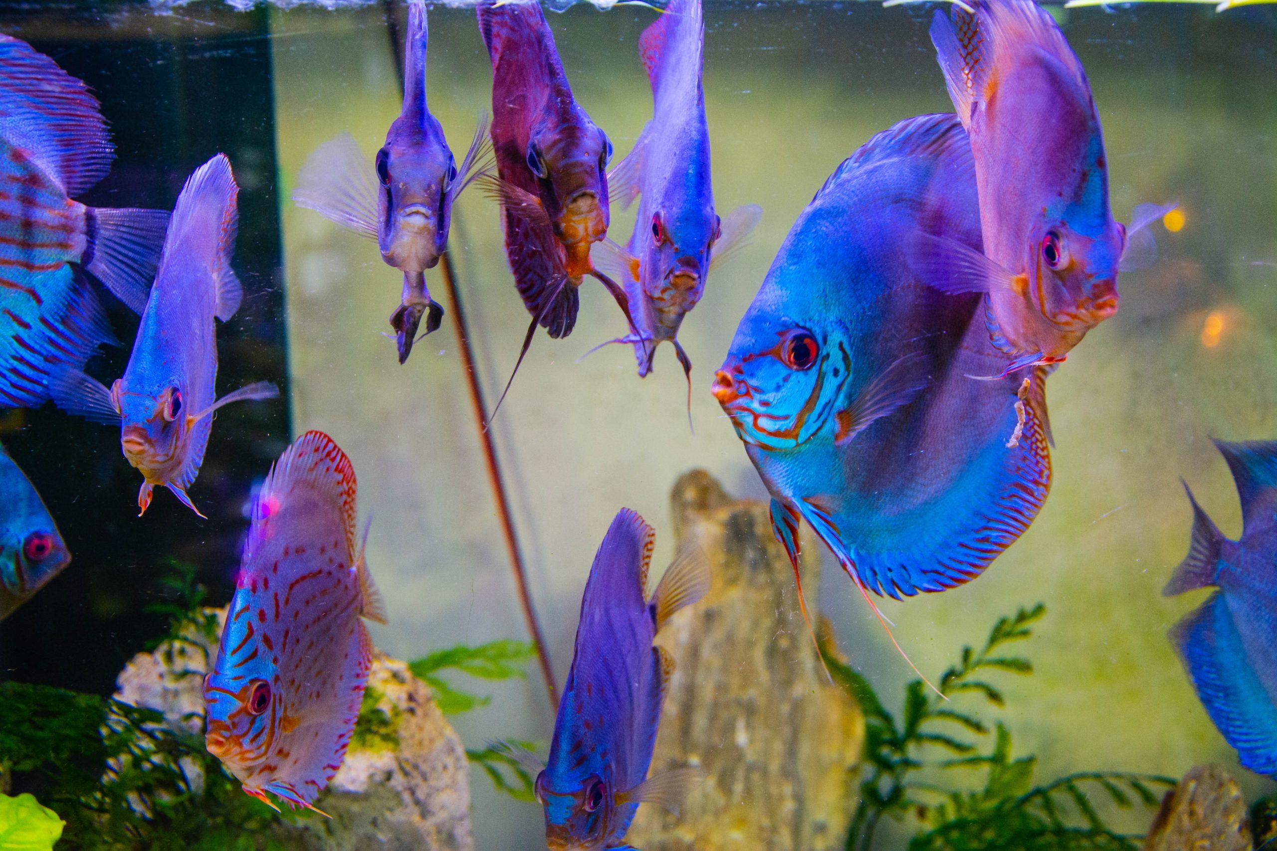 U Javnom akvarijumu: Mesto gde su životinje uvek na prvom mestu (FOTO) 11