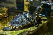 U Javnom akvarijumu: Mesto gde su životinje uvek na prvom mestu (FOTO) 24