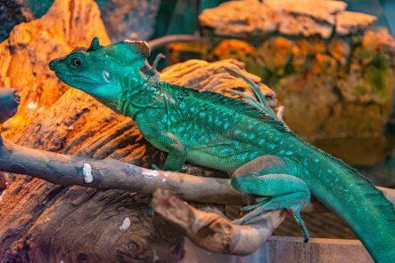 U Javnom akvarijumu: Mesto gde su životinje uvek na prvom mestu (FOTO) 25