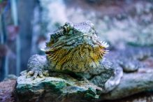 U Javnom akvarijumu: Mesto gde su životinje uvek na prvom mestu (FOTO) 26
