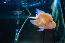 U Javnom akvarijumu: Mesto gde su životinje uvek na prvom mestu (FOTO) 28