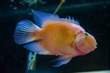 U Javnom akvarijumu: Mesto gde su životinje uvek na prvom mestu (FOTO) 29