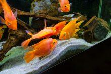 U Javnom akvarijumu: Mesto gde su životinje uvek na prvom mestu (FOTO) 30