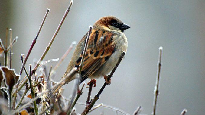 Populacija ptica u EU već nekoliko decenija u opadanju 1
