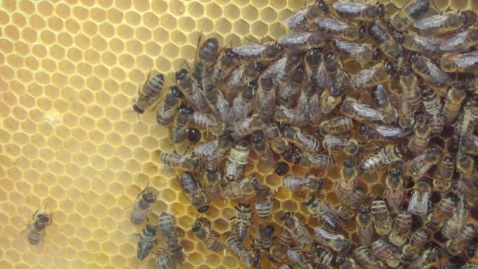 Uloga pčelinjeg voska u pećinskom slikarstvu 1