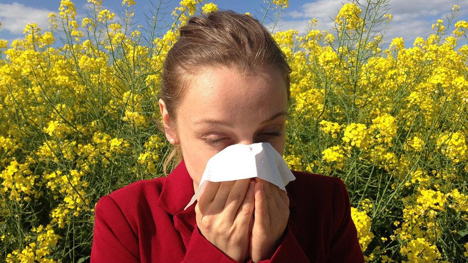 Kako lečiti alergiju na ambroziju? 2