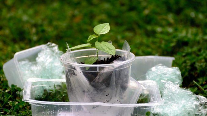Nanoplastika čak i u biljkama 1